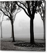 Trees In The Midst No. 06 Canvas Print