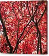 Trees Of Autumn Canvas Print
