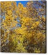 Trees Of Color Canvas Print