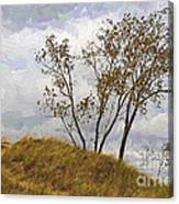 Trees Of The Beach Canvas Print