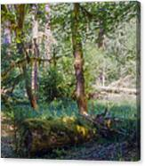 Trees Of The Rainforest Canvas Print