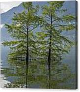 Trees On A Flooding Alpine Lake Canvas Print
