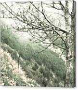 Trees On A Mountain Canvas Print