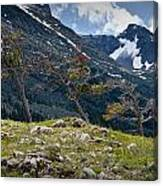 Trees On Top Of A Ridge At Glacier National Park Canvas Print