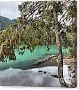Trees Overhanging Cheakamus Lake Canvas Print