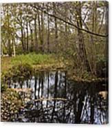 Trees Reflection Canvas Print