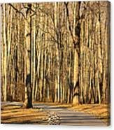 Trees Shadows Canvas Print
