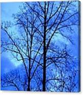 Trees So Tall In Winter Canvas Print