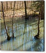 Trees Standing In The Water Canvas Print