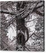 Trees Under Snow Canvas Print