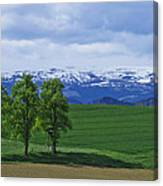 Trees With Mountains Canvas Print