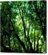 Treetops 1 Canvas Print