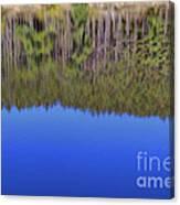 Treflections Canvas Print