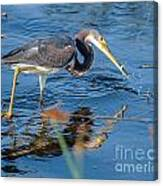 Tri With Fish Canvas Print