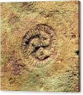 Tribrachidium Fossil Canvas Print