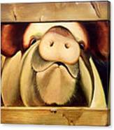 Tricia The Pig Canvas Print