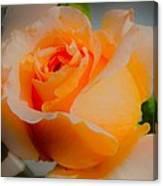 Tricia's Rose 8.6.14  Canvas Print