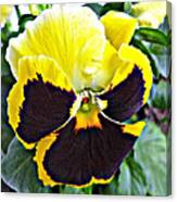 Tricolor Pansy Canvas Print
