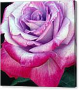 Tricolor Rose Canvas Print
