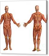 Trigger Points On The Human Body Canvas Print