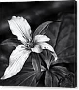 Trillium - Black And White Canvas Print