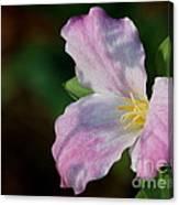 Trillium Blush Canvas Print