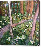 Trillium Treasure Hunting Canvas Print
