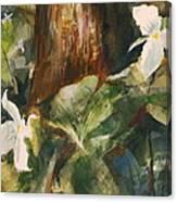 Trillium Woods 3 Canvas Print