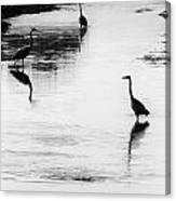 Trilogy - Black And White Canvas Print