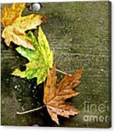 Trio Of Leaves Canvas Print