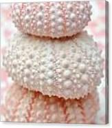 Trio Of Pink Sea Urchins Canvas Print