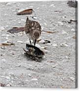 Trio Of Shore Birds Canvas Print
