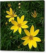 Trio Of Yellow Flower Blossoms Canvas Print