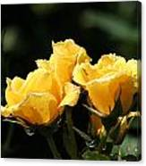 Trio Of Yellow Roses Canvas Print