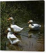 Triple Ducks Canvas Print