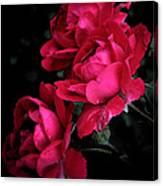 Triple Rose  Canvas Print