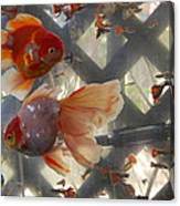 Triple Tail Goldfish Canvas Print