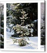 Triptych - Christmas Trees In The Forest - Featured 3 Canvas Print
