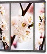 Triptych Light Of Spring 1 Canvas Print