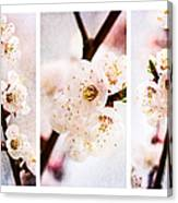 Triptych Light Of Spring 2 Canvas Print