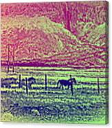 Now And Then You Dream Of The Old Fields Back Home  Canvas Print