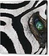 Trophy Hunter In Eye Of Dead Zebra Canvas Print