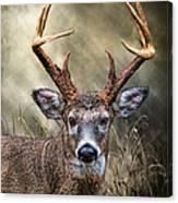Trophy 10 Point Buck Canvas Print