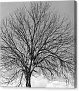 Tropic Winter Canvas Print