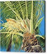 Tropical Bloom Canvas Print
