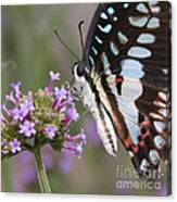Tropical Butterfly Canvas Print