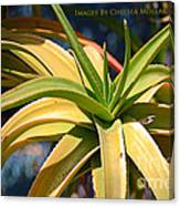 Tropical Cactus Canvas Print