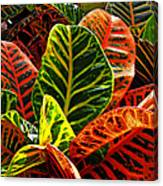 Tropical Croton Canvas Print