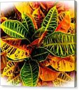 Tropical Croton Vignette Canvas Print