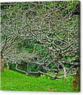Tropical Entanglement Canvas Print